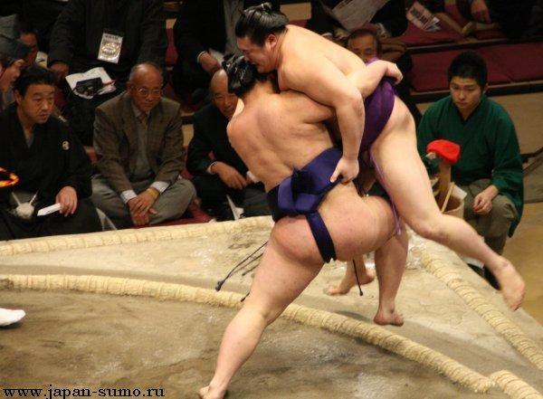 Японские сумо порно
